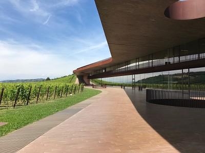 Arquitetura em vinícola