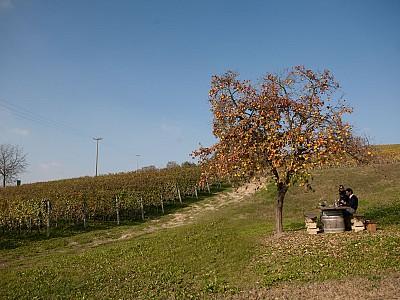 Um picnic de luxo com 460 Casina Bric. Piemonte
